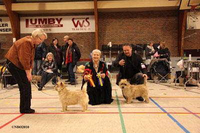 Kennel Nicktime Cairn Terrier - Handling